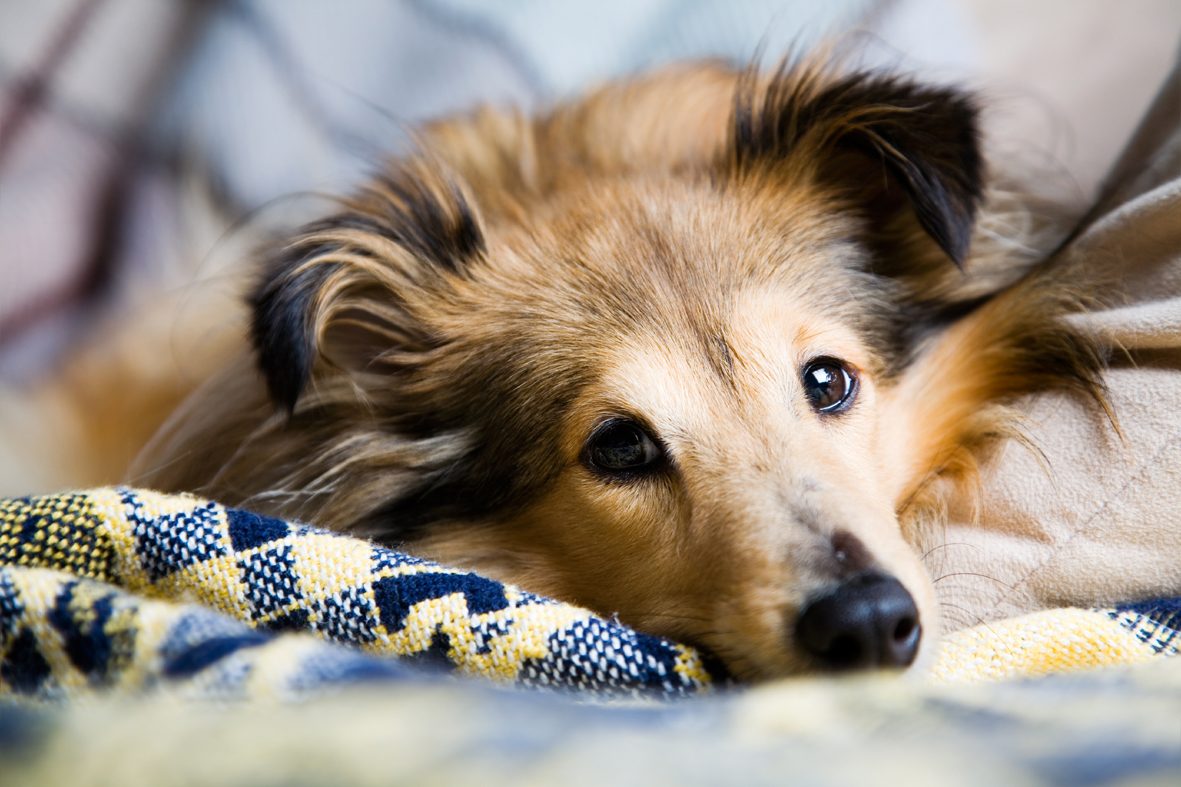 What Can Make A Dog Have A Seizure