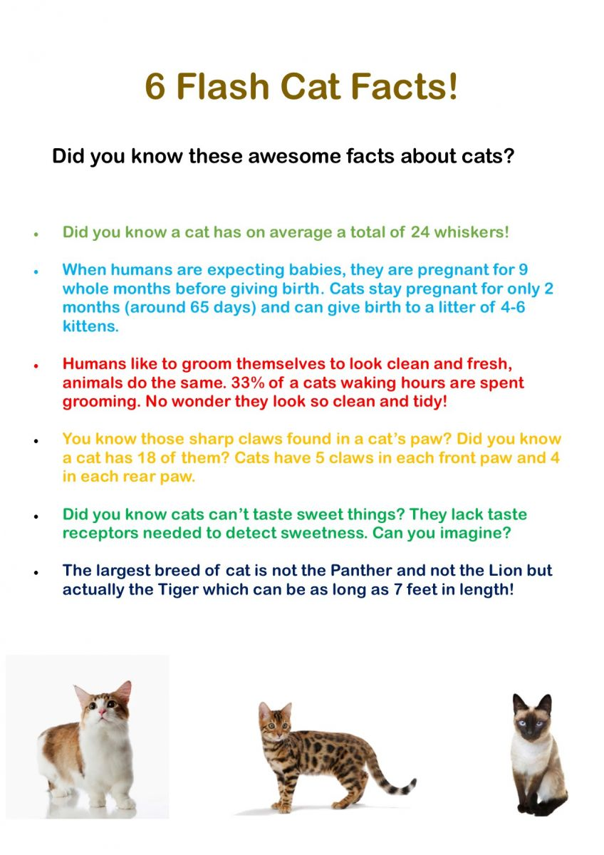 Dogs And Cats Facts Goldenacresdogs