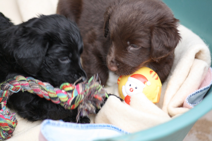 bath cats and dogs home   puppies