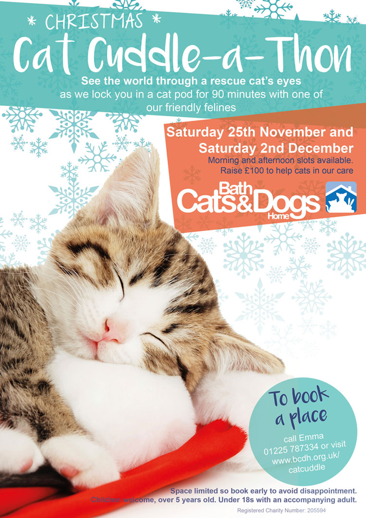 Bath Cats and Dogs Home Cat Cuddle a Thon